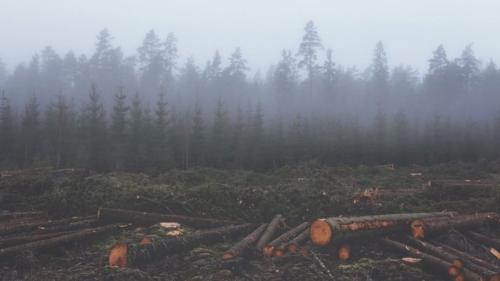 11 persoane au fost audiate în cazul jurnaliștilor bătuți într-o pădure din Suceava