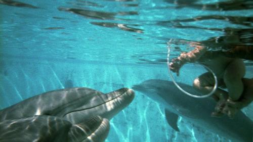 Experiment eşuat al NASA. Cum s-a sinucis un delfin despărţit de instructorul său